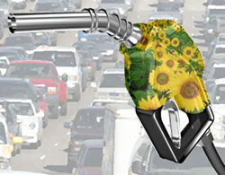 Biodiesel The Alternative Fuel
